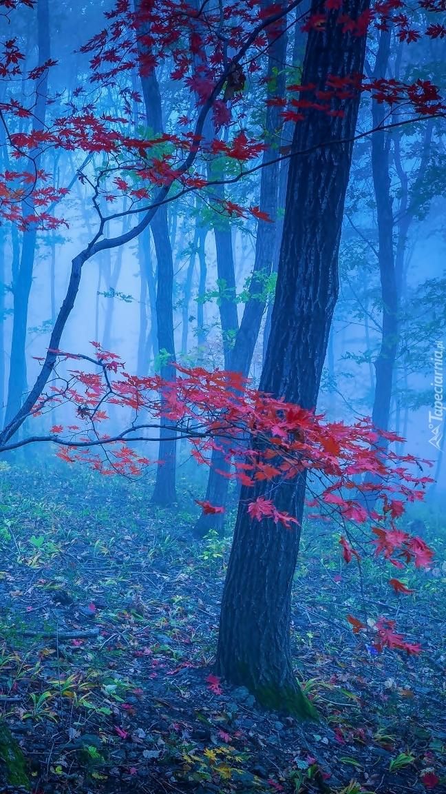 Drzewo z czerwonymi liśćmi w lesie