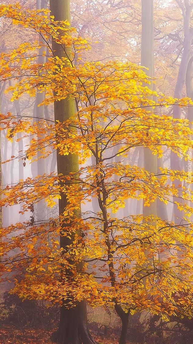 Drzewo z żółtymi liśćmi