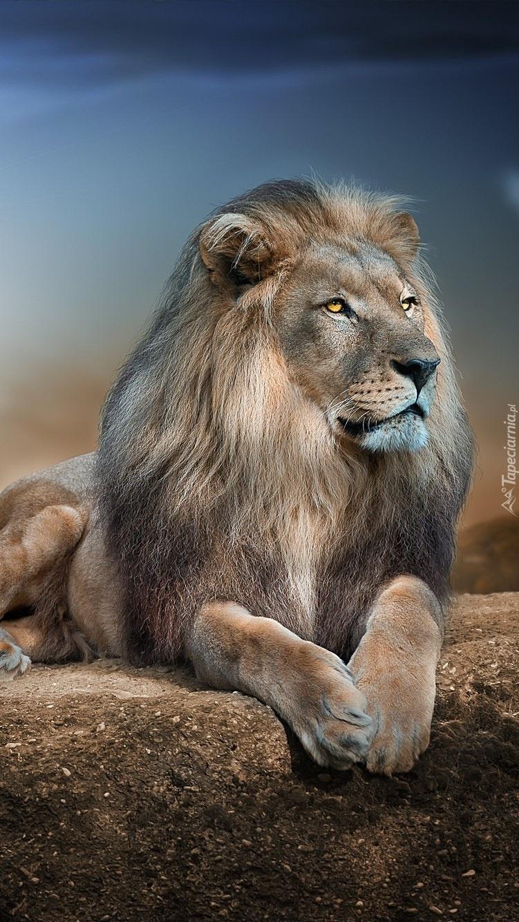 Dumny lew na skale