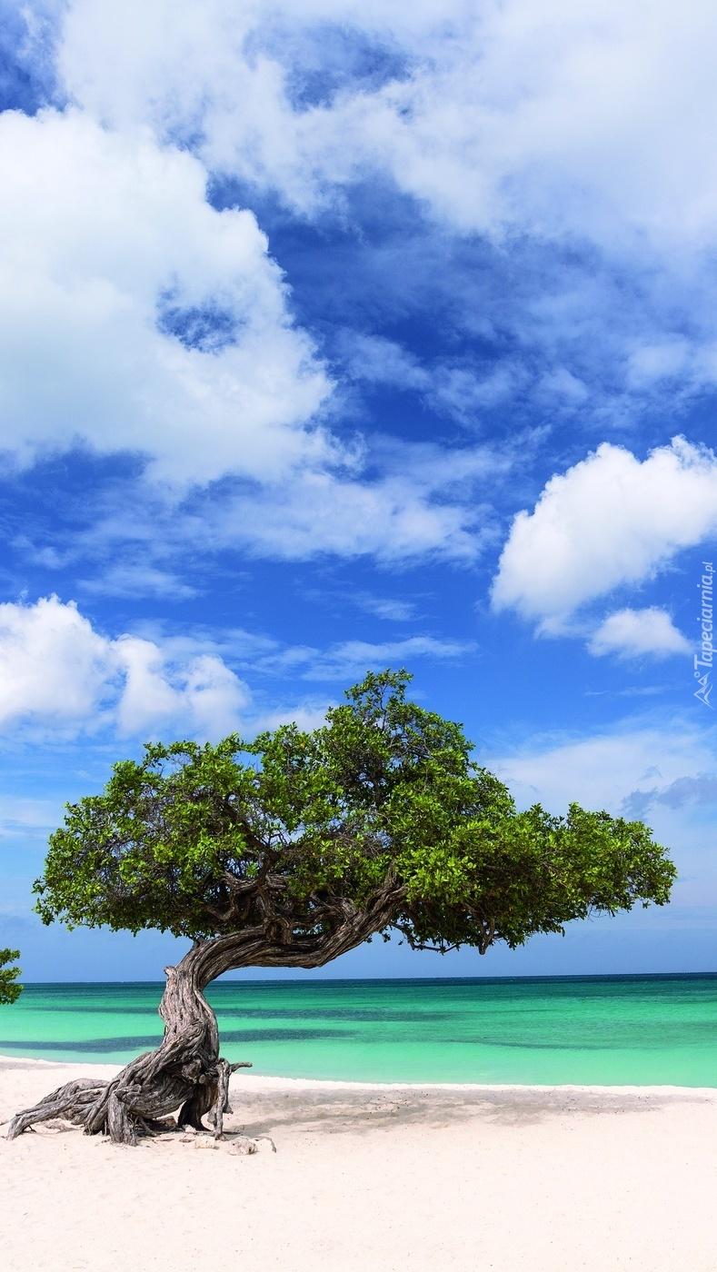 Duże bonsai