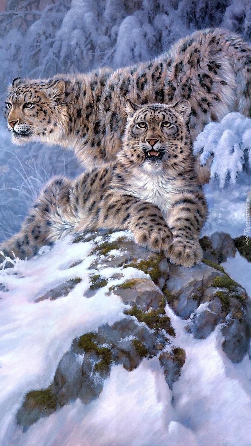 Dwa irbisy zimą