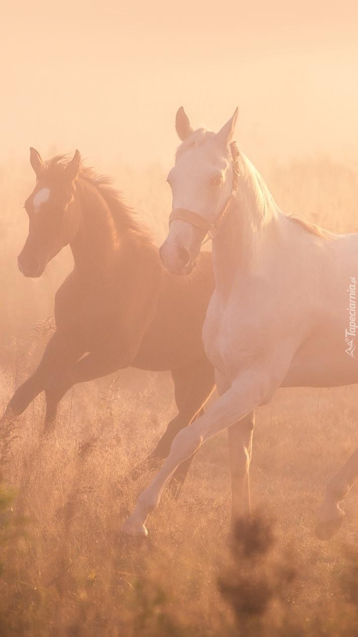 Dwa konie we mgle