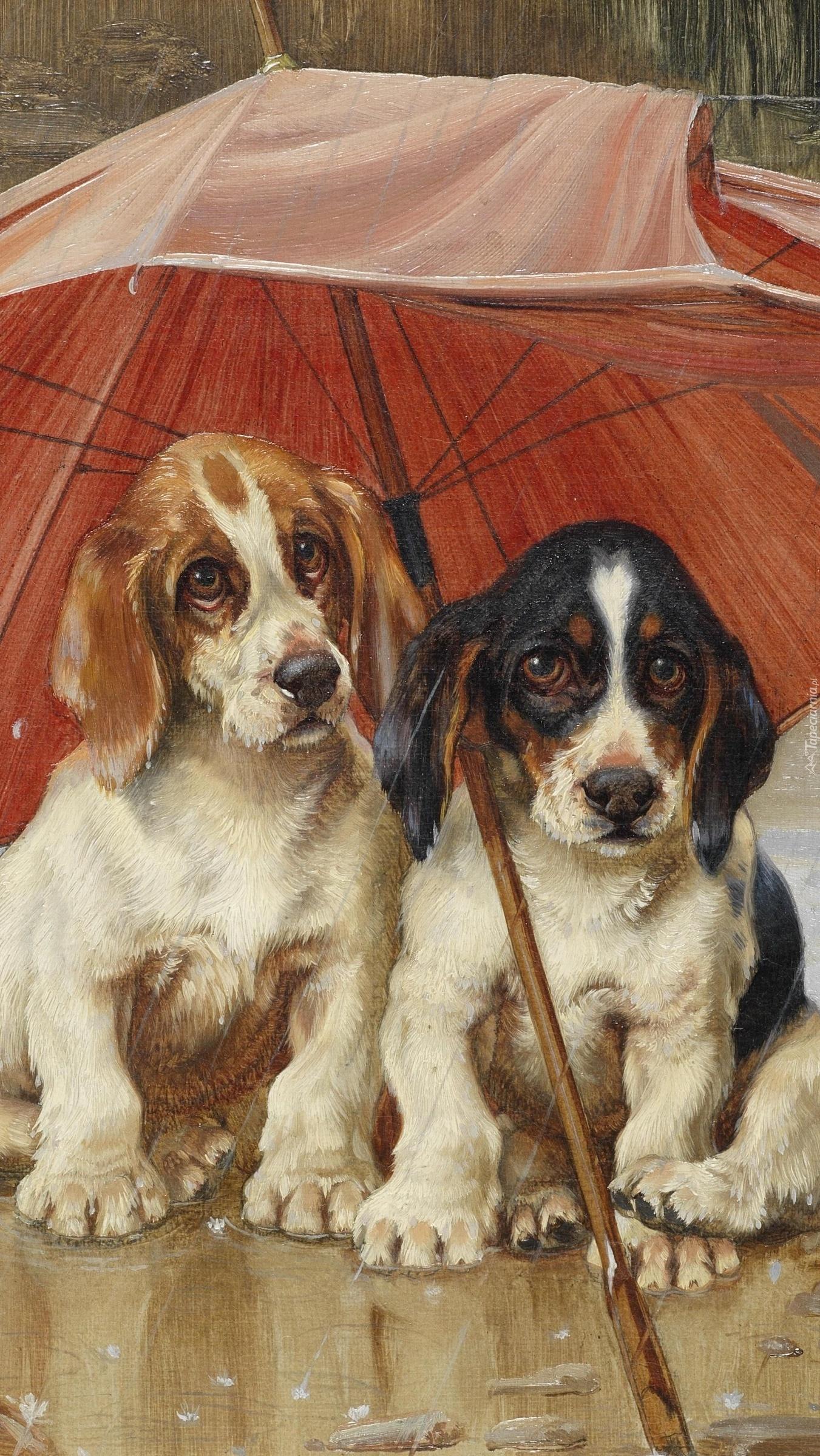 Dwa psy pod parasolem