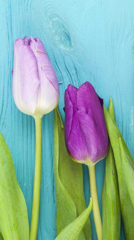 Dwa tulipany