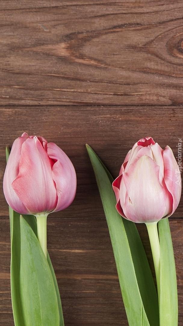 Dwa tulipany na deskach