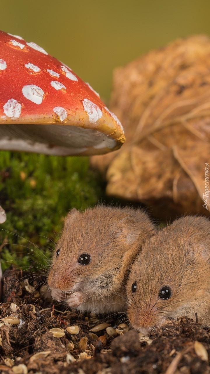 Dwie myszki pod muchomorem