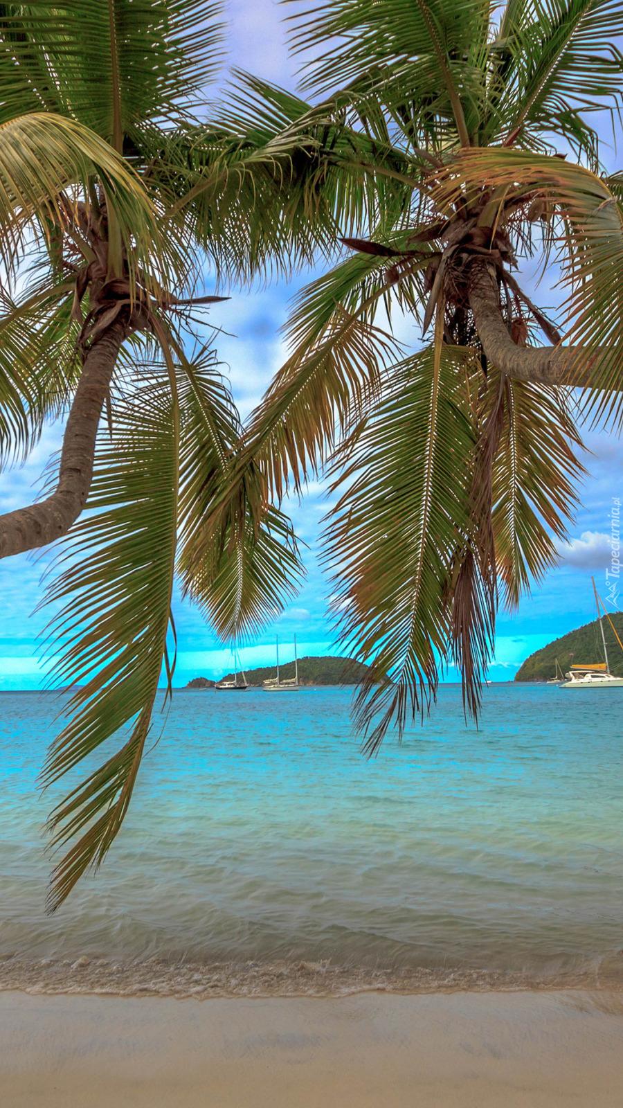 Dwie palmy pochylone nad brzegiem morza