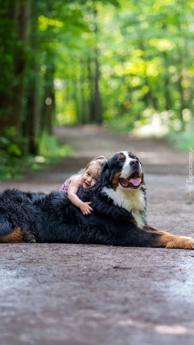 Dziecko i berneński pies pasterski