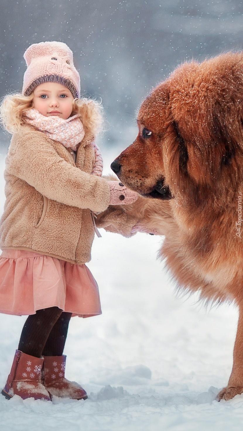 Dziewczynka i mastif tybetański