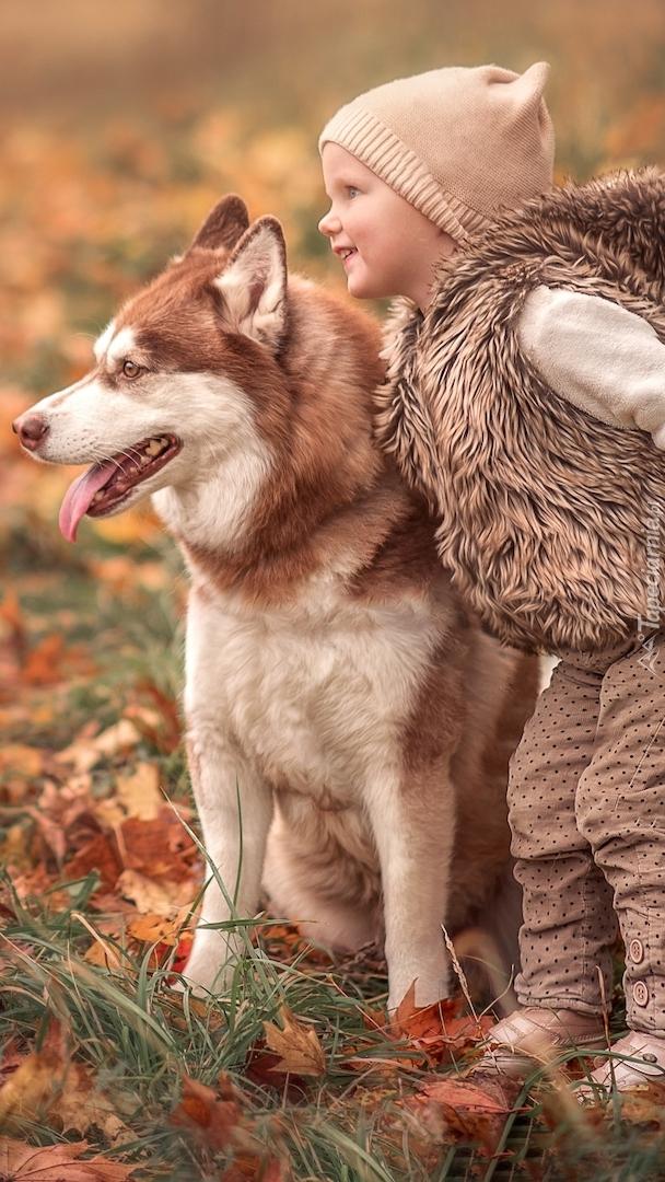 Dziewczynka i rudawy siberian husky