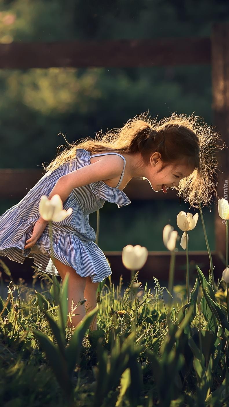 Dziewczynka obok białych tulipanów