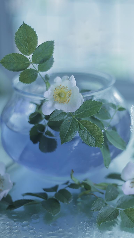 Dzika róża w wazoniku