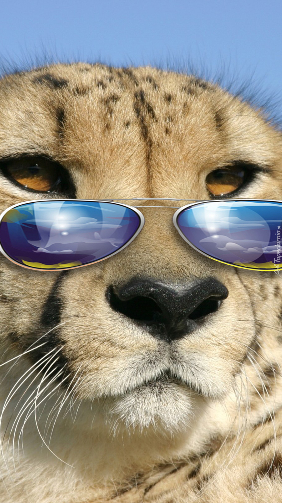 Dziki Kot W Okularach Tapeta Na Telefon