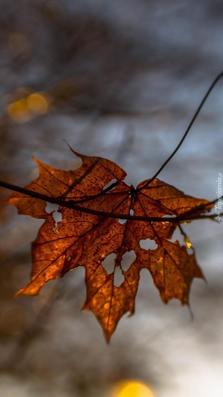 Dziurawy liść na rozmytym tle