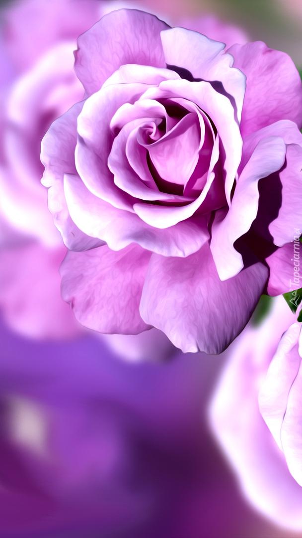Fioletowa róża w grafice