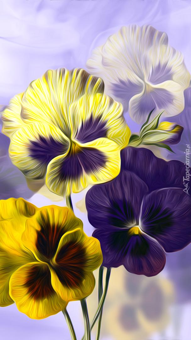 Fioletowe i żółte bratki