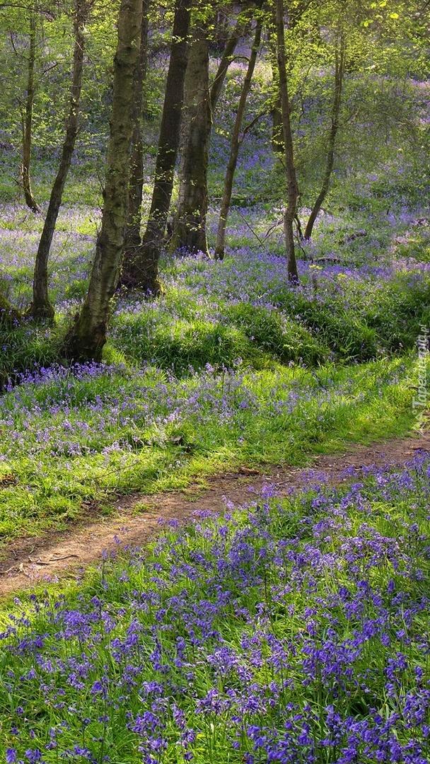 Fioletowe kwiatki przy ścieżce
