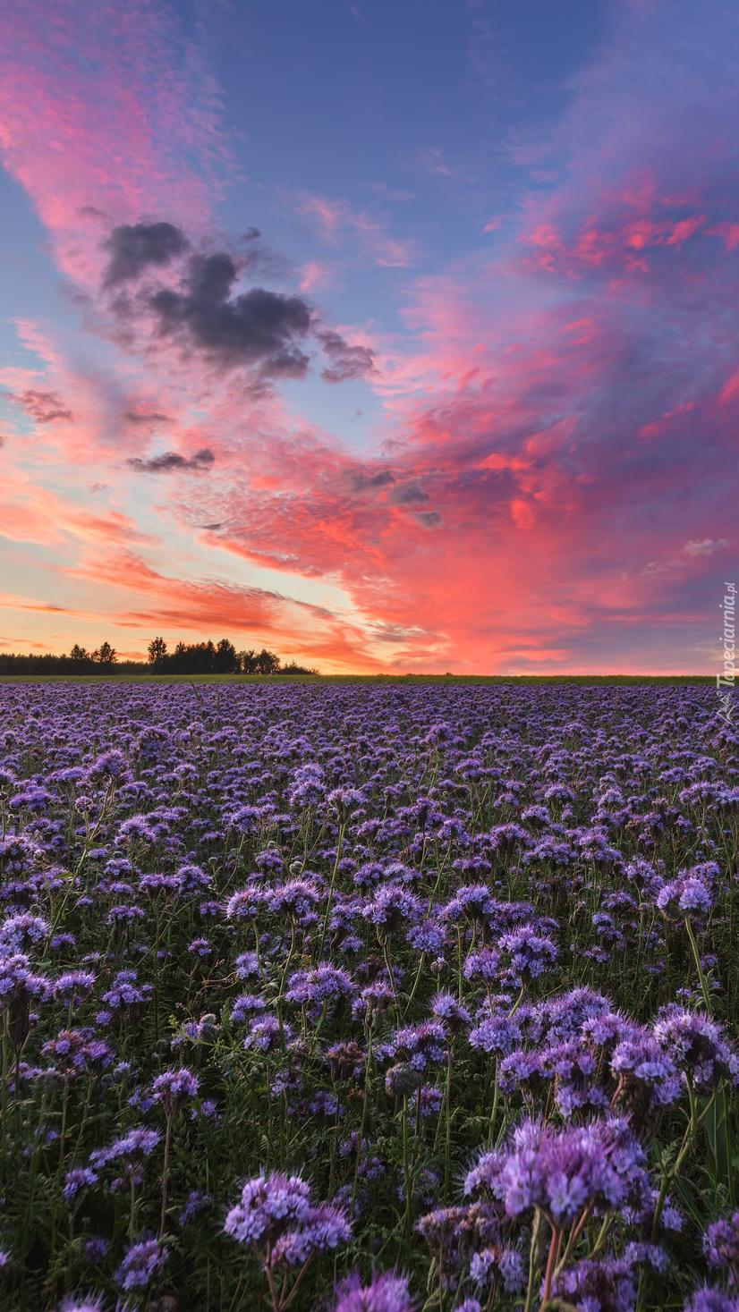 Fioletowe kwiaty na łące
