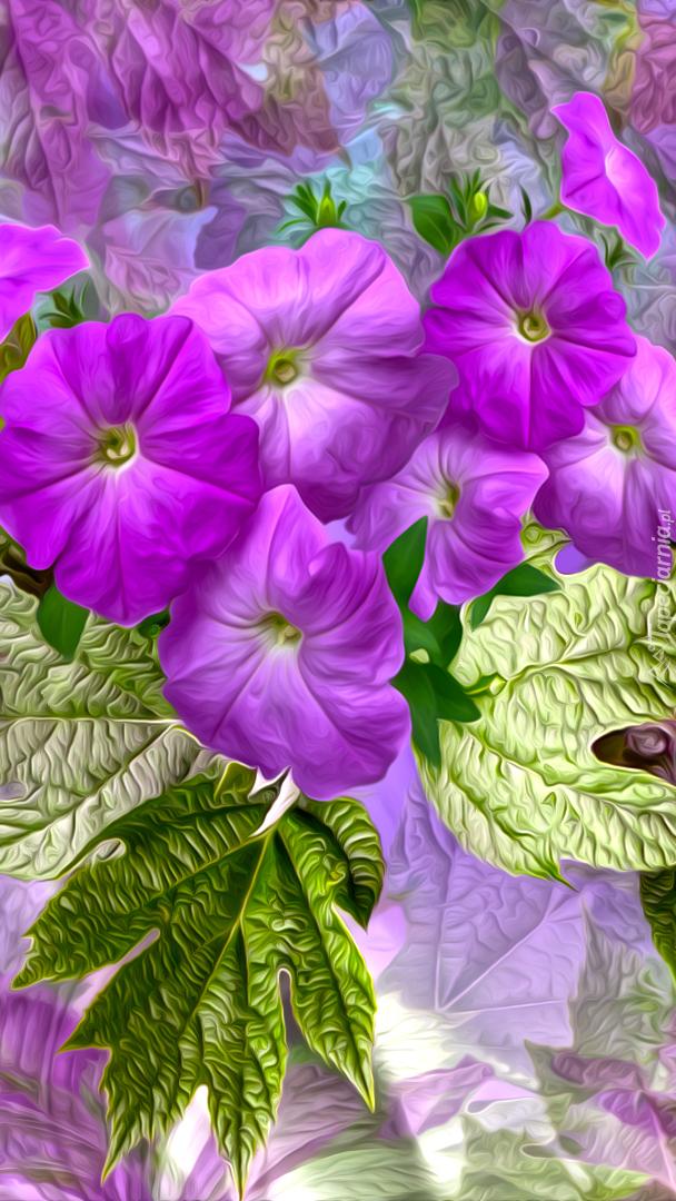 Fioletowe kwiaty petunii