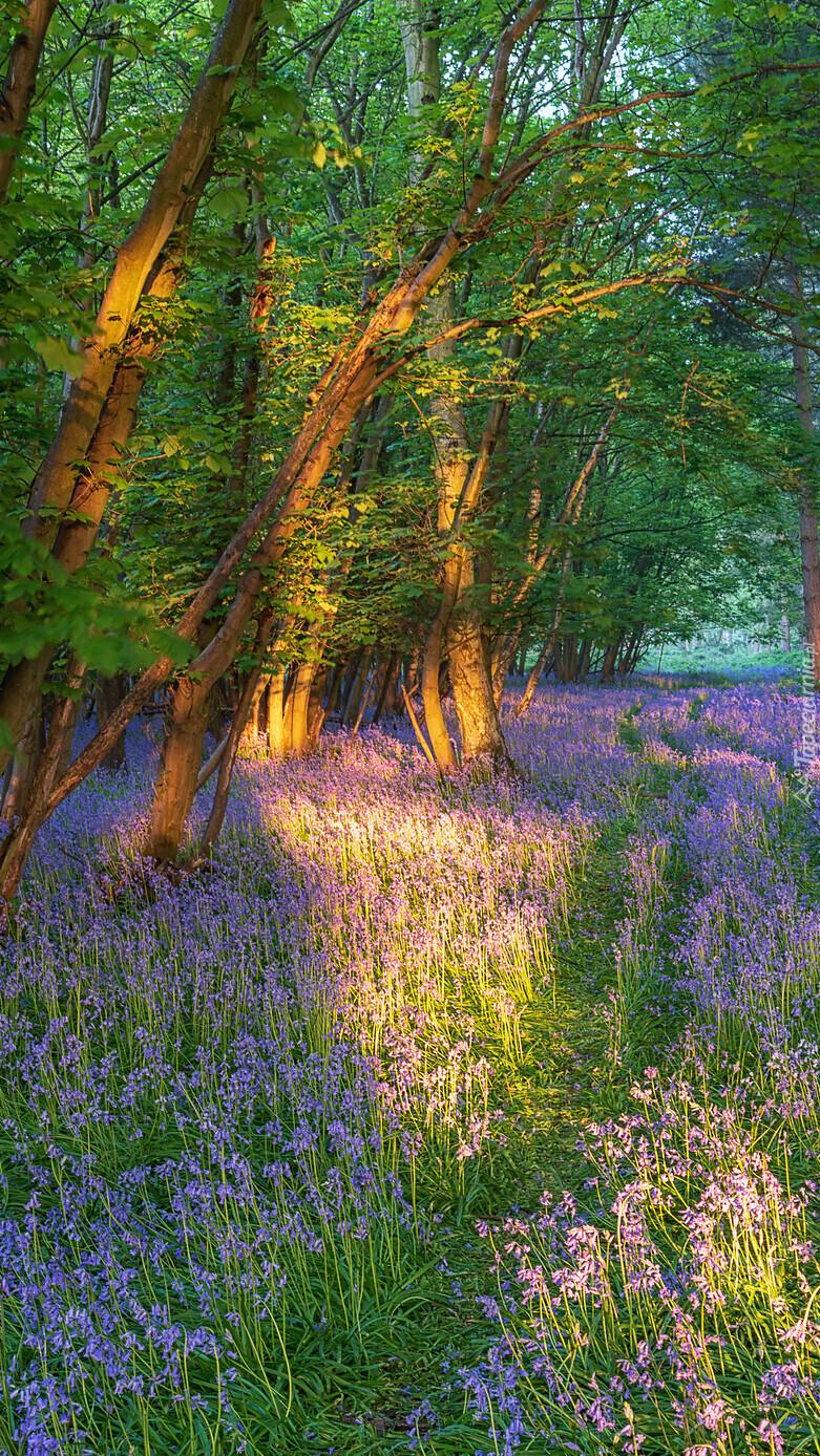 Fioletowe kwiaty pod drzewami w lesie