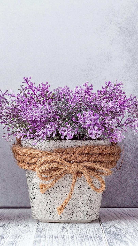 Fioletowe kwiaty w doniczce