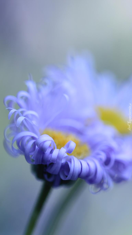 Fioletowe kwiaty w rozmyciu