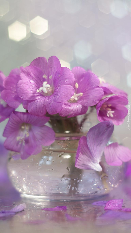 Fioletowe kwiaty w wazoniku
