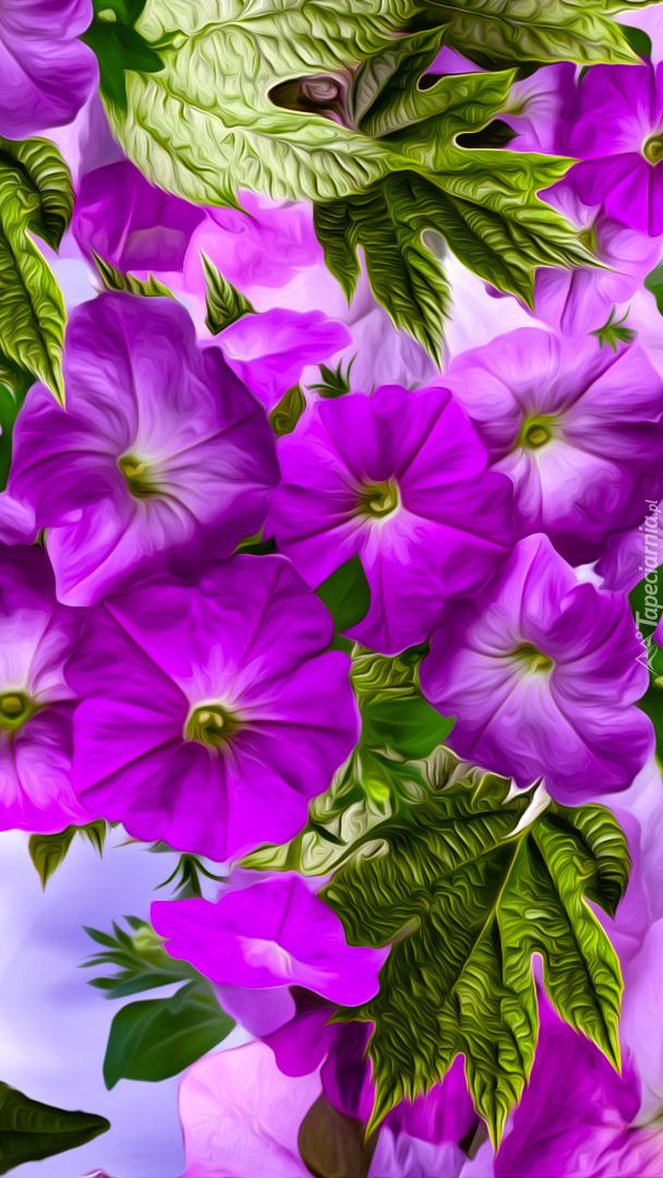 Fioletowe petunie