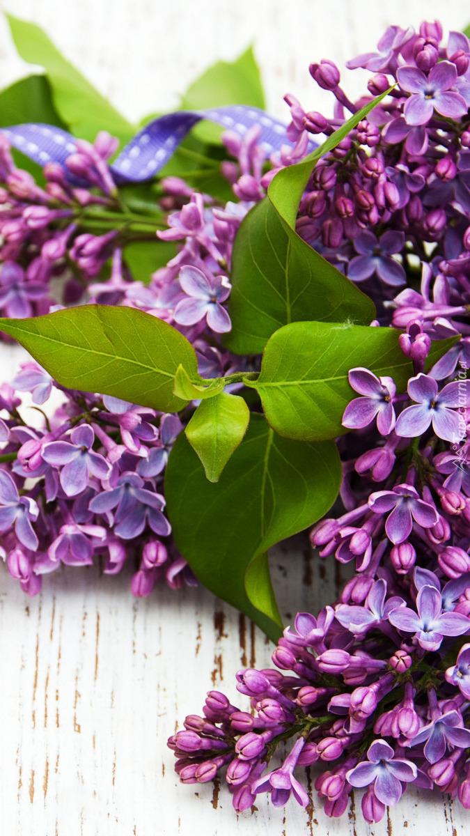 Fioletowy lilak z listkami