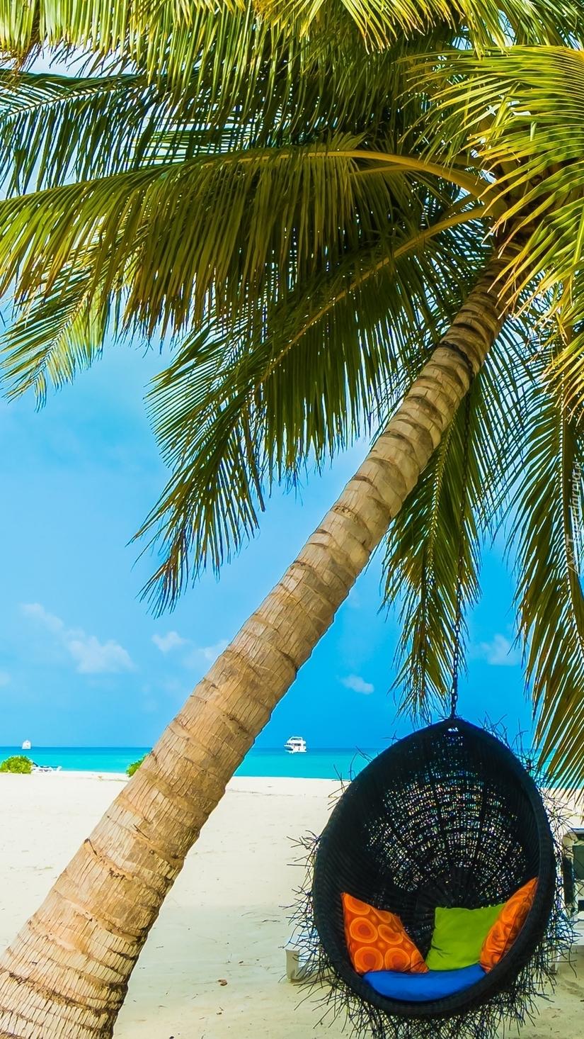 Fotel pod palmą