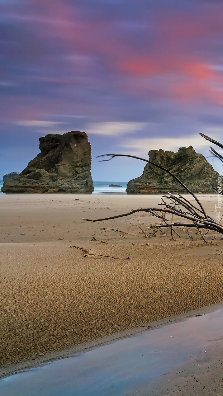 Gałąź na piasku