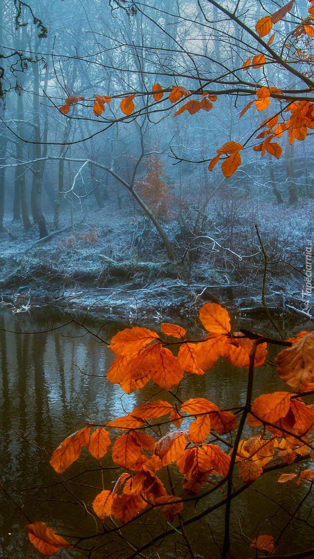 Gałąź z brązowymi liśćmi nad rzeką