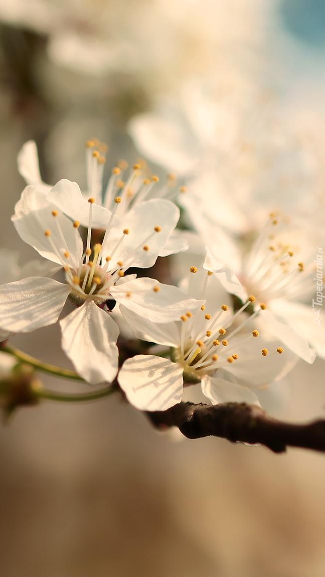 Gałązka białych kwiatów