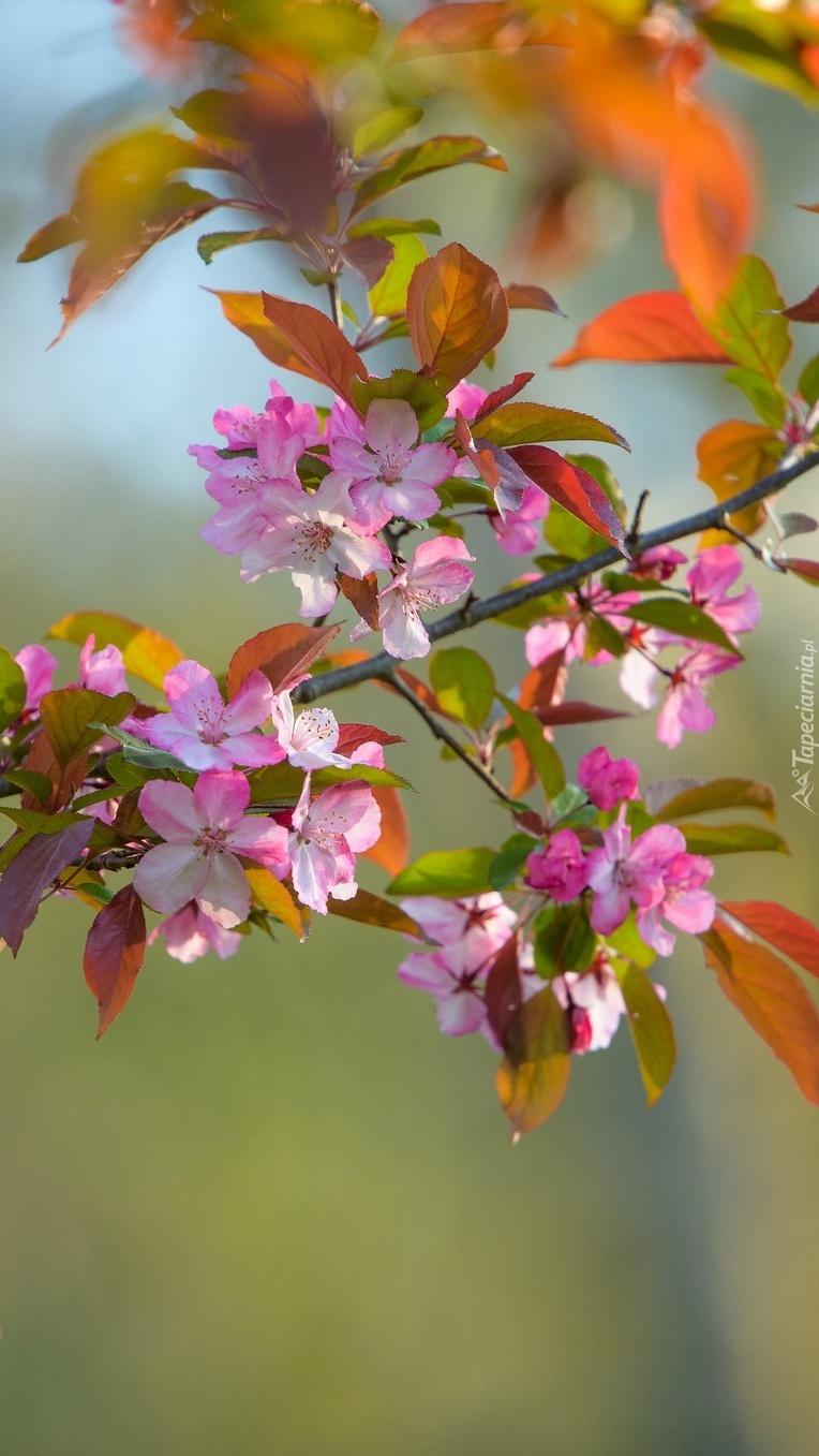 Gałązka drzewa owocowego