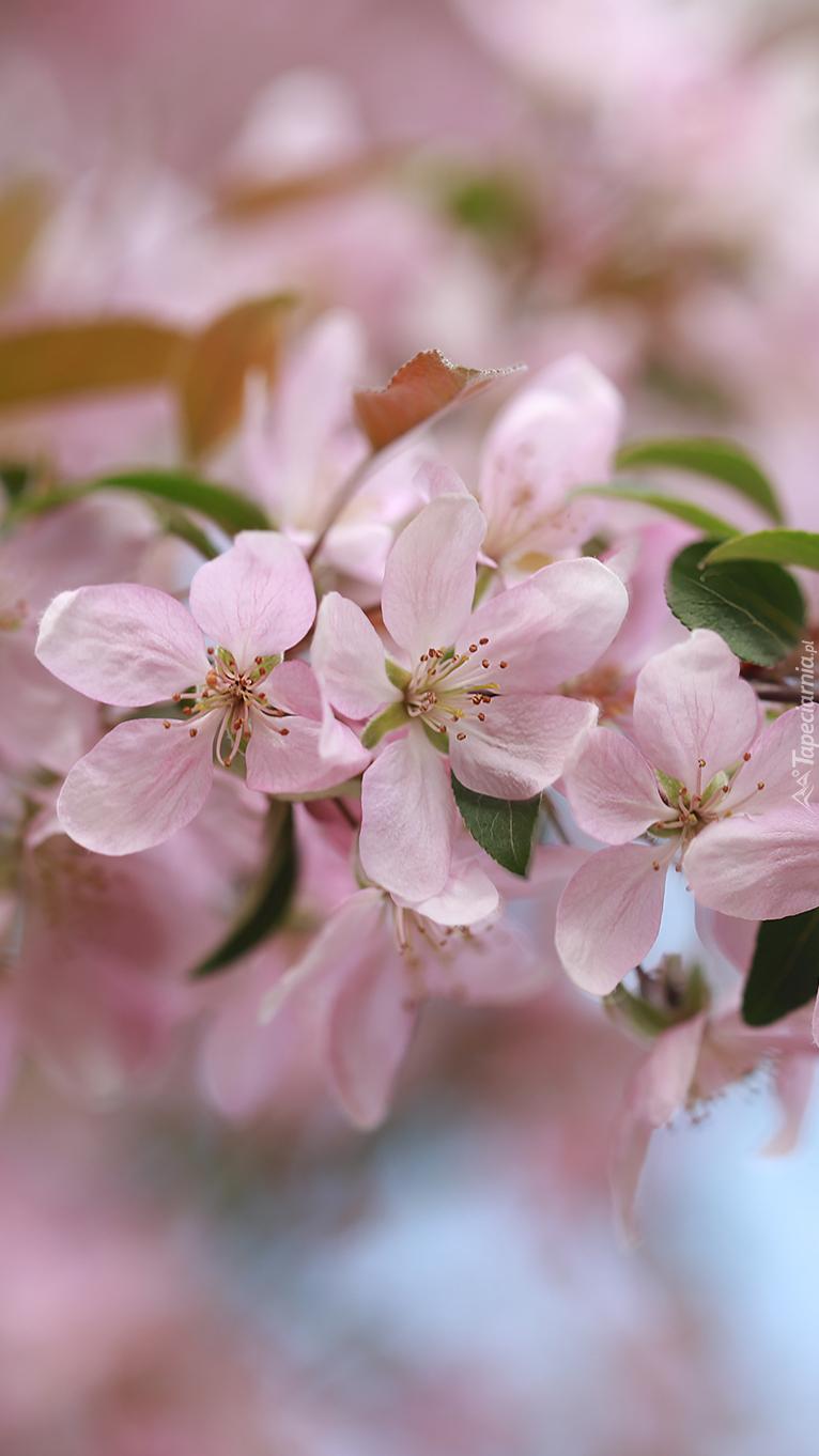 Gałązka drzewa owocowego z kwiatami