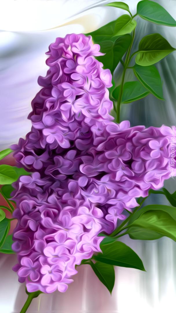 Gałązka fioletowego bzu