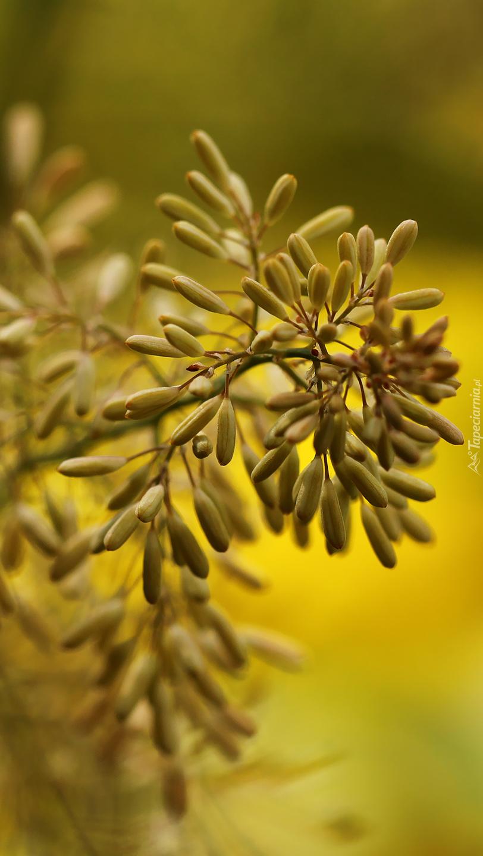 Gałązka rośliny