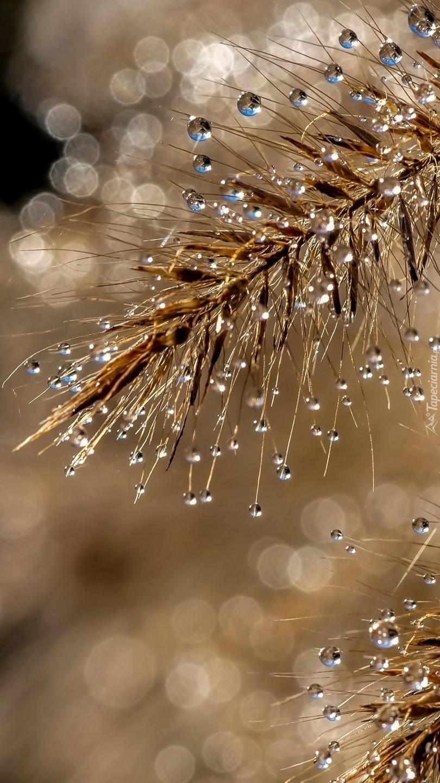 Gałązka w kroplach deszczu