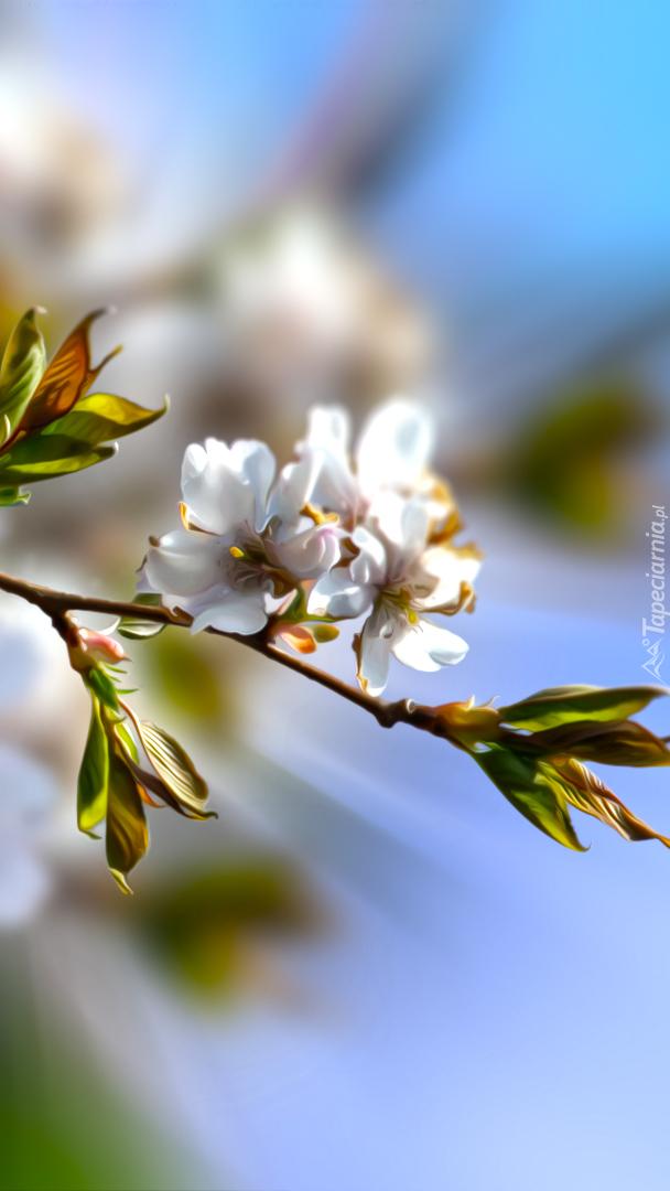 Gałązka wiśni w rozmyciu