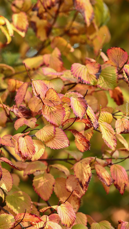 Gałązka z kolorowymi liśćmi