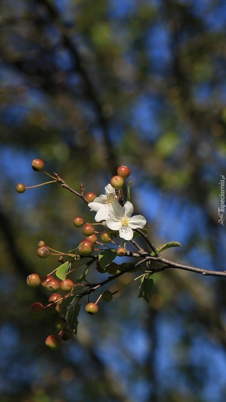 Gałązka z owocami i kwiatami