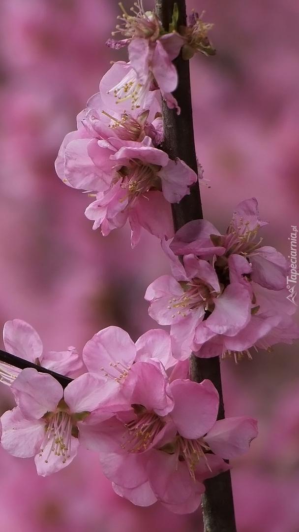 Gałązka z różowymi kwiatami