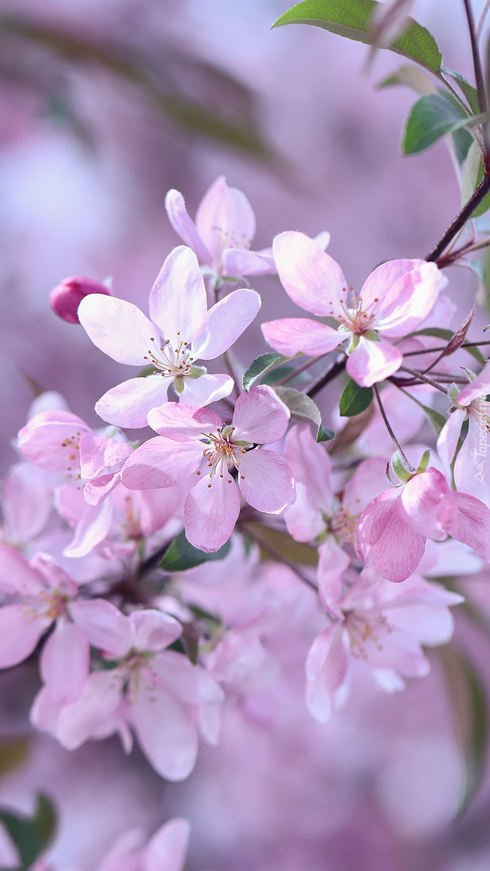 Gałązka z różowymi kwiatkami