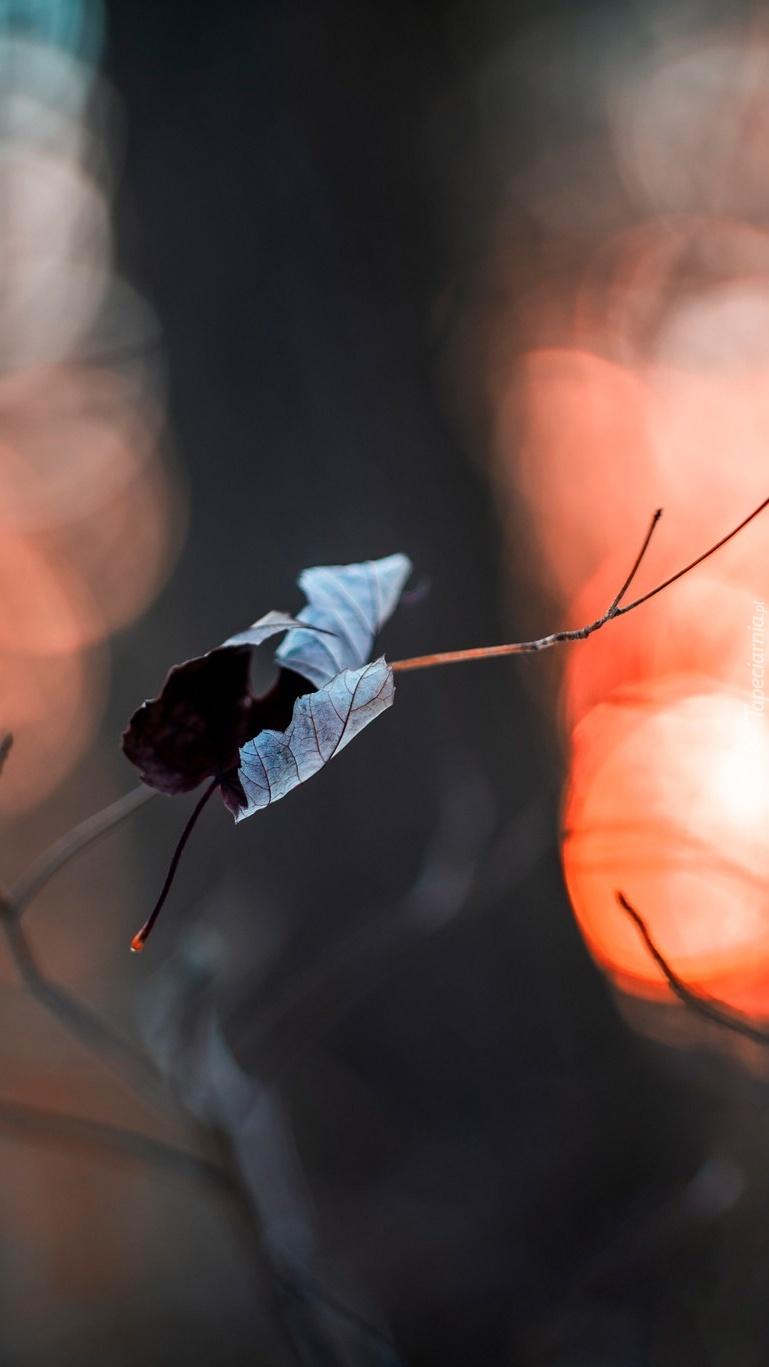 Gałązka z suchym liściem