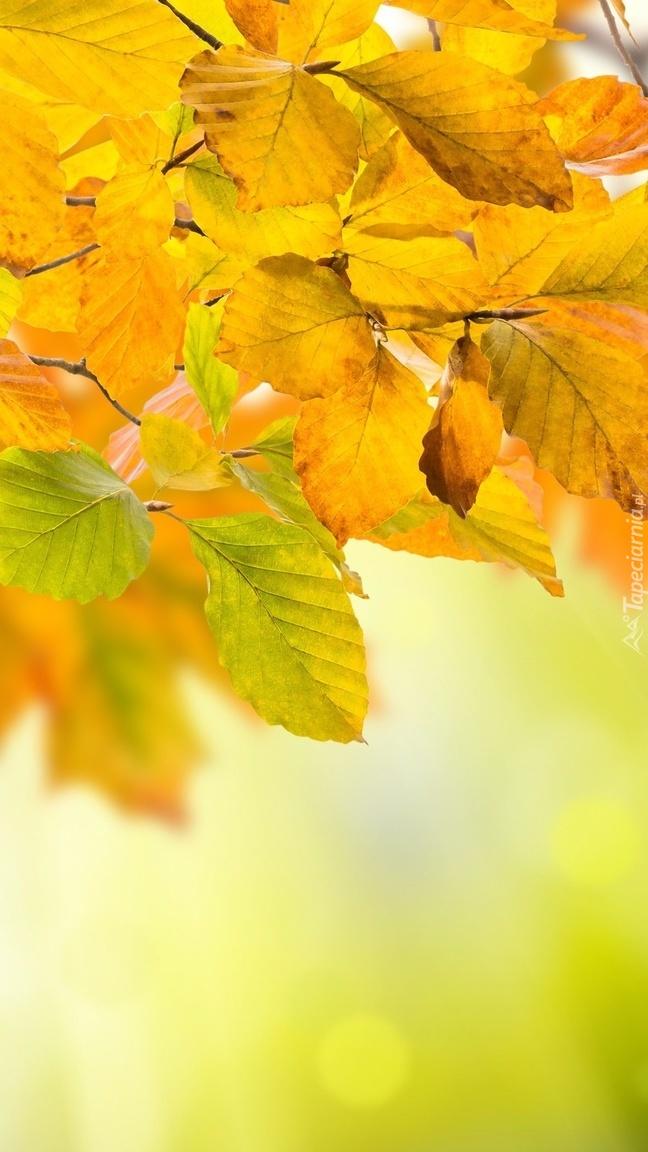 Gałązka z żółtymi liśćmi