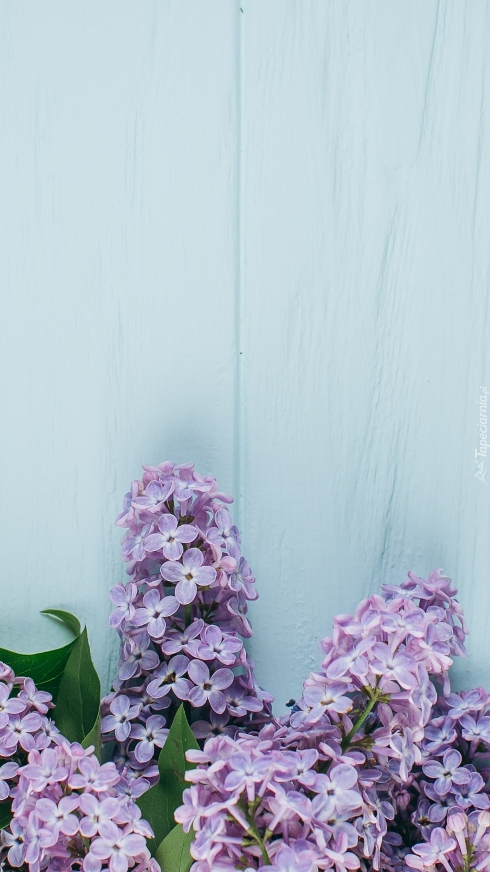 Gałązki fioletowego bzu