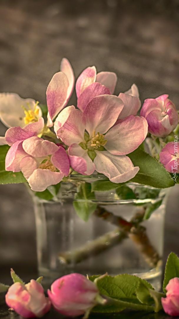 Gałązki kwitnącej jabłoni w szklance