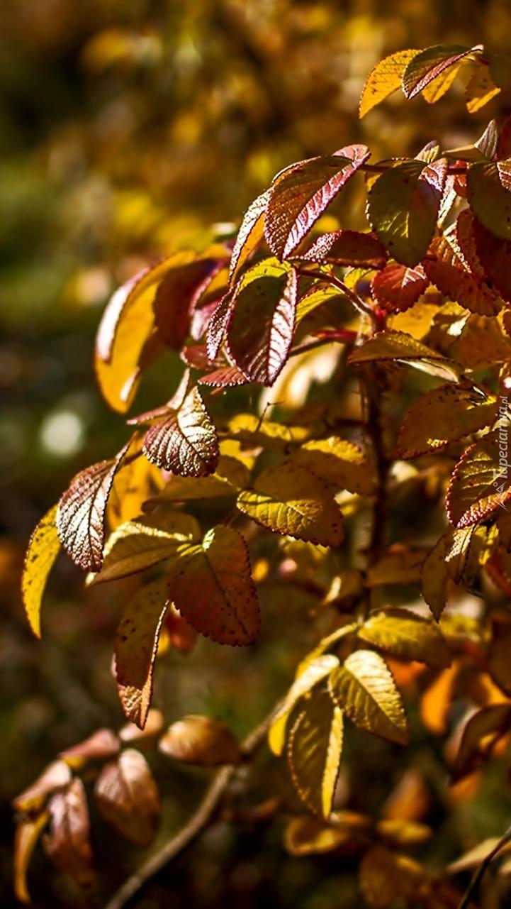 Gałązki z jesiennymi liśćmi
