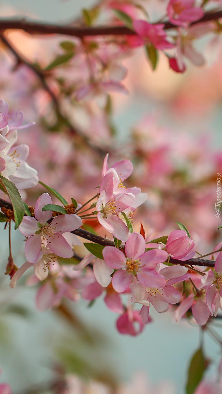 Gałązki z różowymi kwiatkami