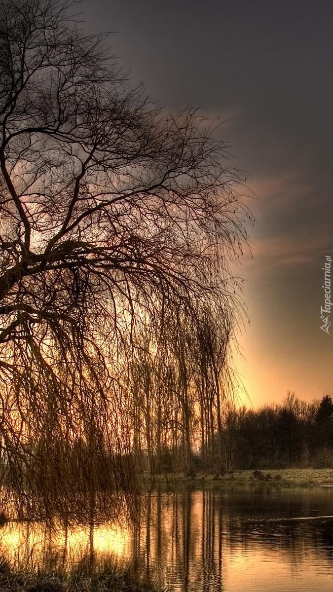 Gałęzie drzewa skąpane w rzece